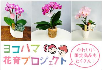 花育プロジェクト